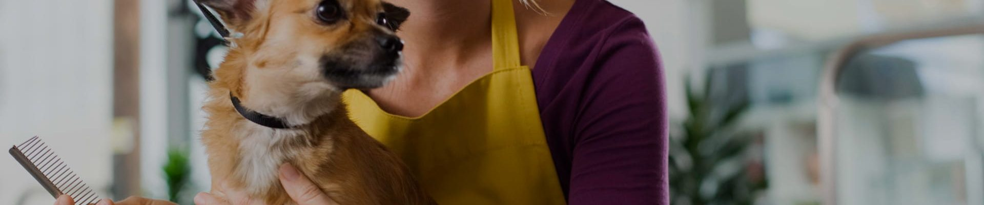 Cabecera de la categoría de Peluquería y estética canina del blog de CIM Formación