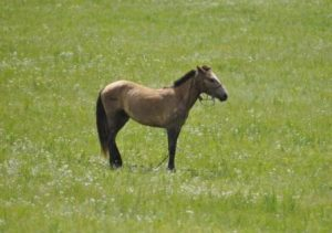 caballo en pradera