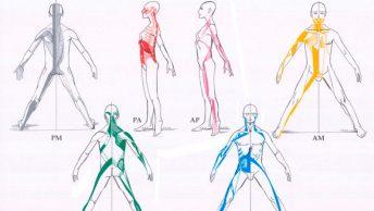cadenas-musculares