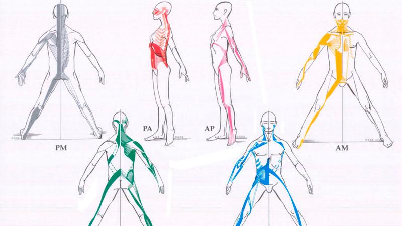Cadenas funcionales musculares