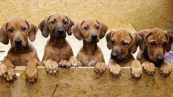 camada-de-cachorros|adoptar-un-cachorro|cachorro-triste