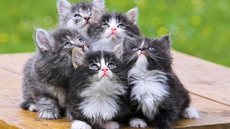 Camada de gatitos