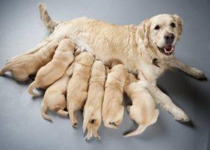 camada-de-perros