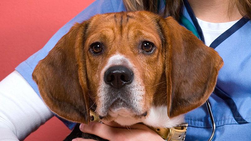 cancer-en-perros|signos-de-cancer-en-perros