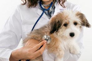 cardiologia perro