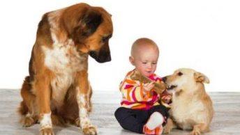 celos en el perro|perro mordiendo pantalon|perro y propietario|perros peleando|atencion y cuidados al perro|perrosjuntos