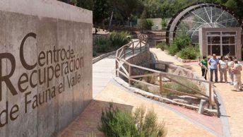 centro-de-recuperacion-de-fauna-el-valle|recuperacion-pajaro-centro-min