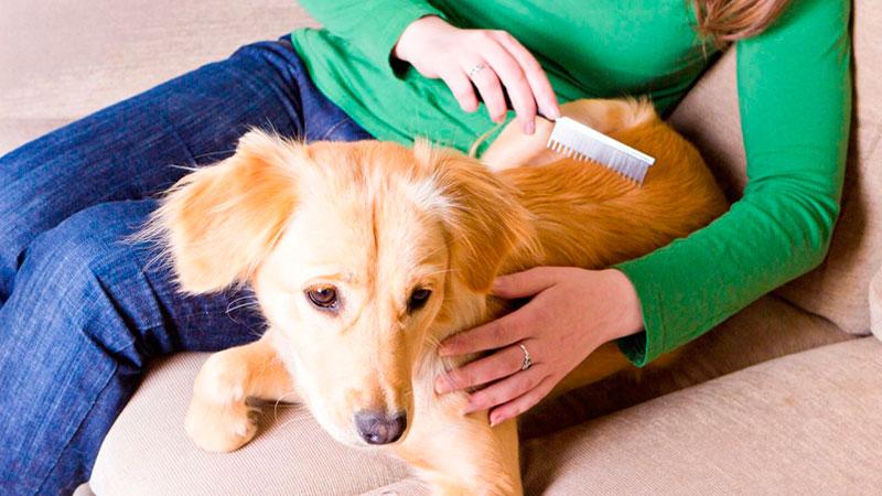 cepillado-perro|lavado-perro|enredos-en-el-pelo-del-perro