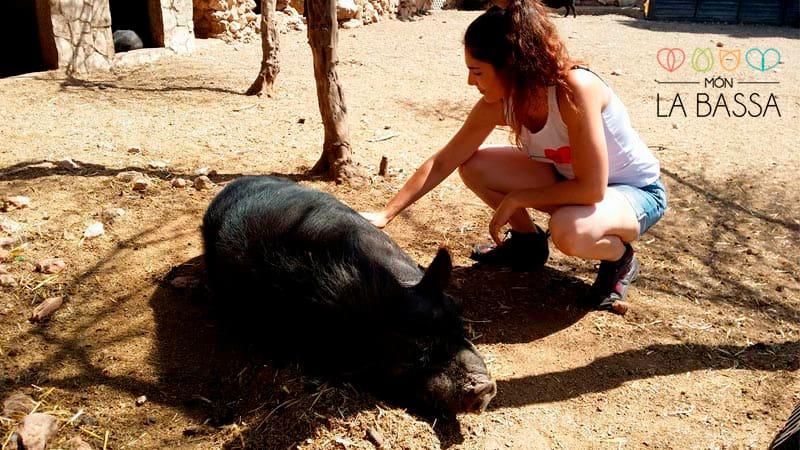 cerdo-oing-min|oing2