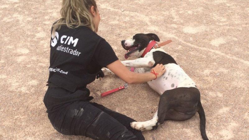 clases-del-curso-de-adiestramiento-canino
