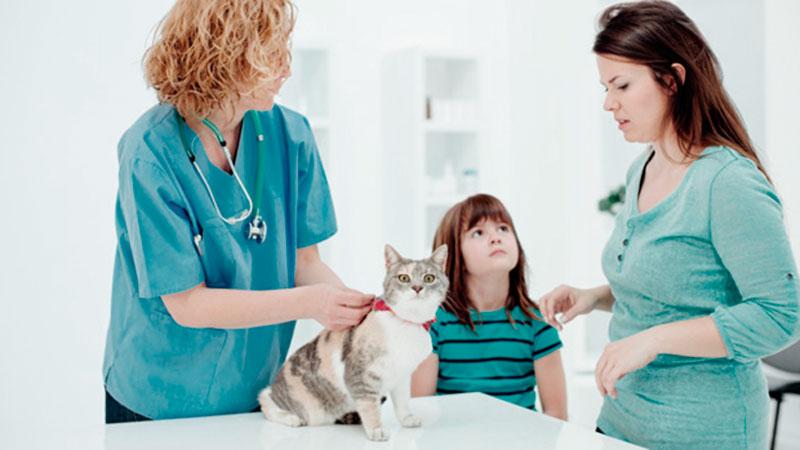 cliente en la clínica veterinaria con su gato