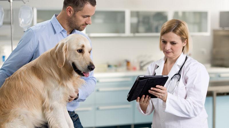 Clientes en la clínica veterinaria: el caradura