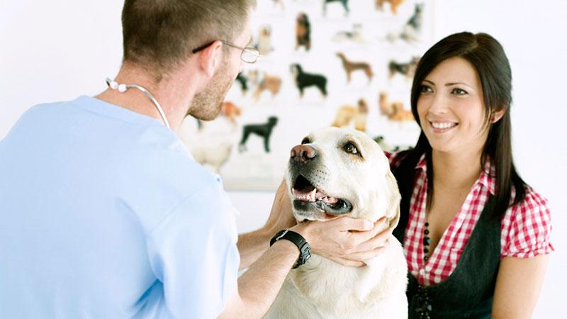 clientes-en-la-clinica-veterinaria|cliente-pregunton-en-la-clinica-veterinaria|clientes-en-la-clinica-veterinaria-el-caradura|cliente-clinica-veterinaria|clientes-en-la-clinica-veterinaria-el-sabelotodo