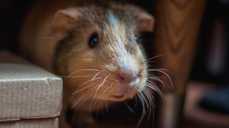 Cuidado y manejo de pequeños mamíferos 1
