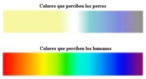 colores que perciben los perros y los seres humanos