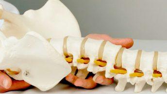 columna-vertebral-min