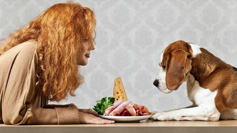 Cómo elegir comida para mascota más adecuada