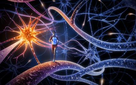 como-maneja-tu-cerebro-la-fatiga-muscular-3