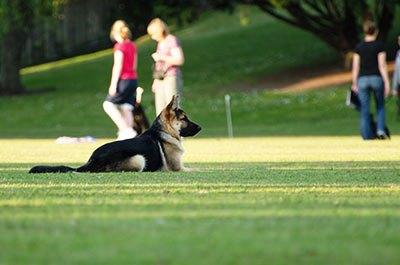 competicion obediencia perros|obediencia canina|real sociedad canina