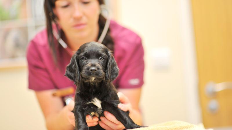 comunicacion-clinica-veterinarias