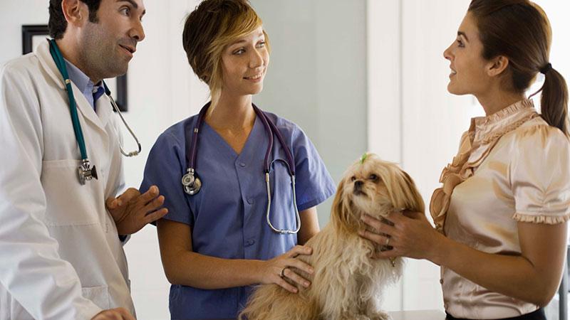comunicacion-con-el-cliente-en-la-clinica-veterinaria|empatia-en-la-comunicacion-con-el-cliente-en-la-clinica-veterinaria