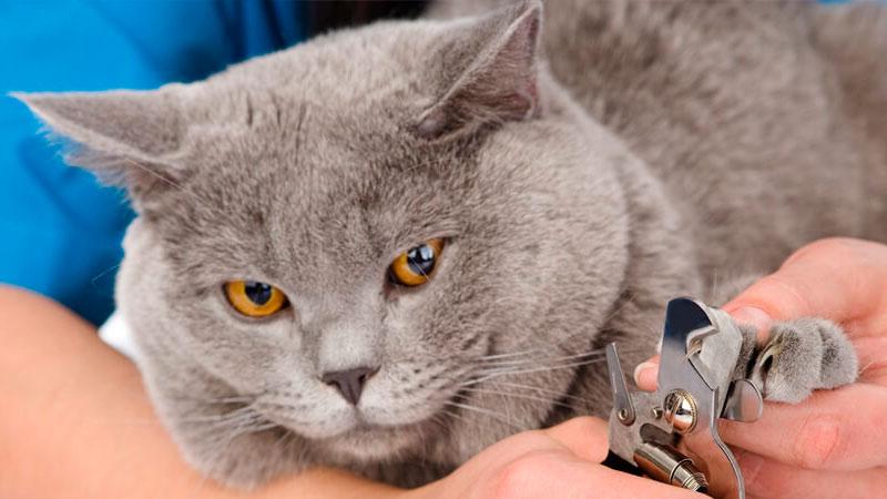 cortar-unas-gatos