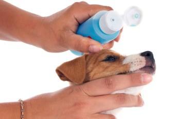 crema-sol-perro