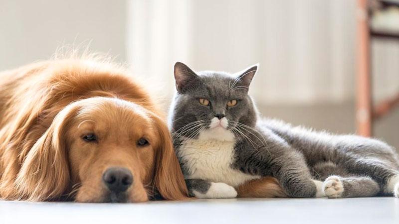 cuánto recuerdan los perros y gatos