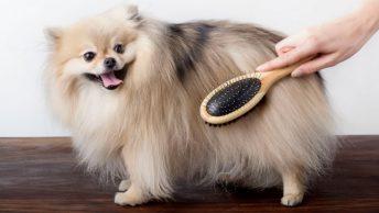 cuidado-de-perros-veterinaria