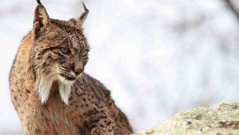 cuidador-de-animales-salvajes|cuidador-de-animales