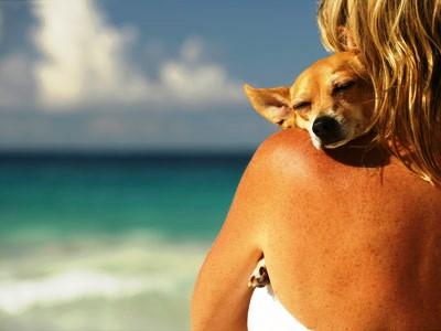cuidados-perro-en-verano|perro-bajo-sombrilla|perro-descansando|quemadura-perro|crema-sol-perro|pelado-perro
