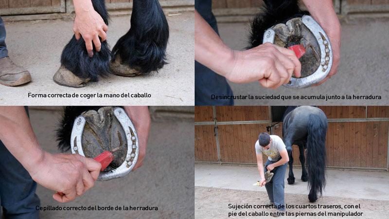 Cuidados y mantenimiento de los cascos (paso a paso) 1