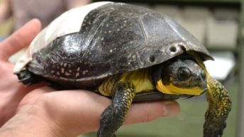 curar-heridas-caparazon-tortuga-2|curar-heridas-caparazon-tortuga-1|curar-heridas-caparazon-tortuga-3