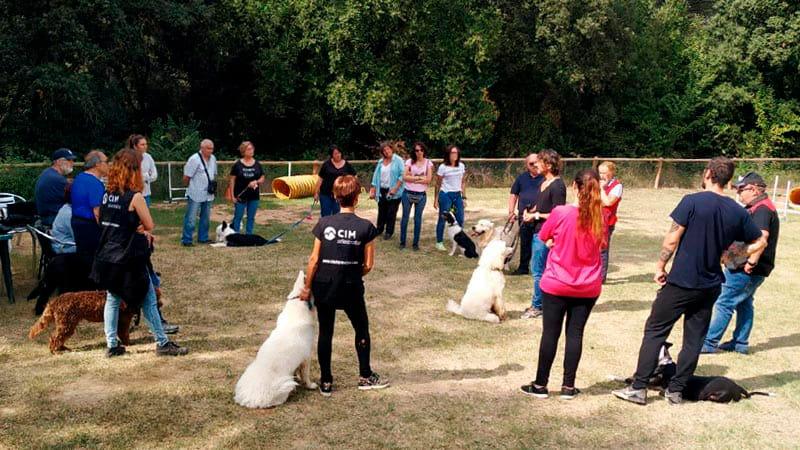 curso-educador-canino-cim-min|curso-educador-canino-cim
