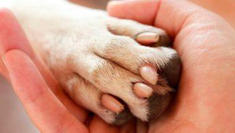 dedos en las patas de los perros|cuantos-dedos-tienen-las-patas-de-los-perros|huella-patas-de-los-perros