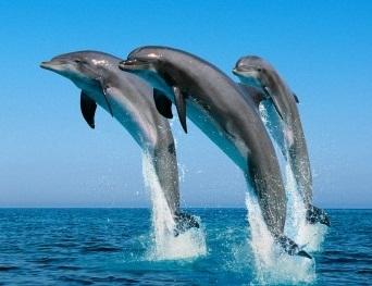 delfin-mular-tursiops-truncatus-CIMFormacion|delfin-mular-CIMFormacion