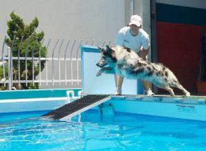 deportes-perro-piscina