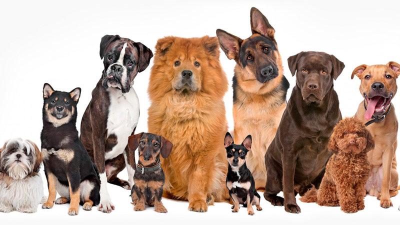 diferencias-razas-perros-gatos