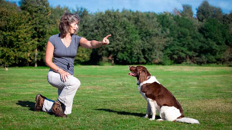 educadora-canina-entrenando-a-perro-sordo|entrenamiento-de-perros-sordos