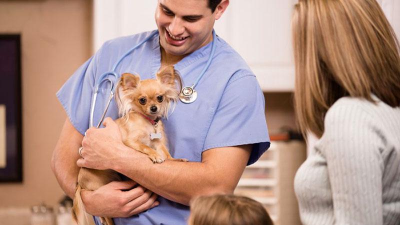 Empatía en la comunicación con el cliente en la clínica veterinaria