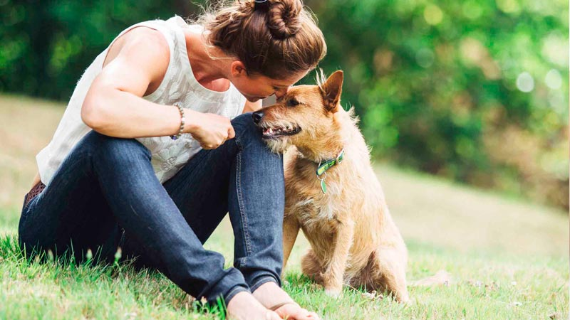 empatia-perros