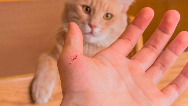 enfermedad-aranazo-gato