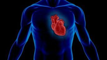 entrenamiento-cardiovascular-1|entrenamiento-cardiovascular-2|entrenamiento-cardiovascular-pesas|entrenamiento-cardiovascular-hiit