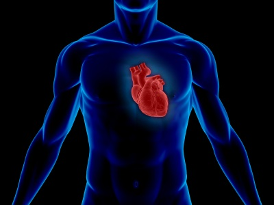 entrenamiento-cardiovascular-1 entrenamiento-cardiovascular-2 entrenamiento-cardiovascular-pesas entrenamiento-cardiovascular-hiit