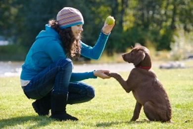 entrenamiento-perros-1|entrenamiento-perros-2|entrenamiento-perros-3|Border-Collie