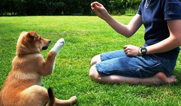 entrenamiento-perros-3