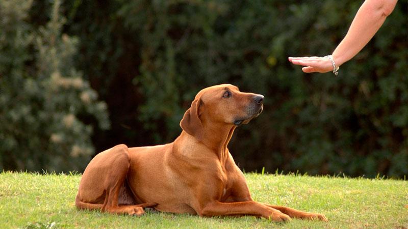 entrenamiento-perros-recompensas