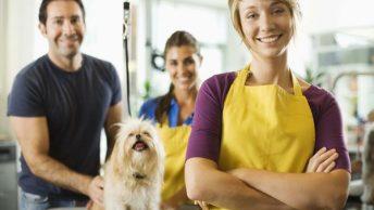 equipo de peluqueros caninos|peluqueria canina|peluqueros caninos