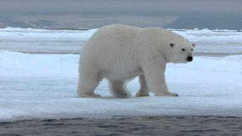 especies-mas-amenazadas-oso-polar|pingüino emperador|zorro-polar|ballena-beluga|buey-almizclero|tejon|tortuga laúd|pez-payaso|flamenco|koala|foca-ocelada|tejon-europeo-min