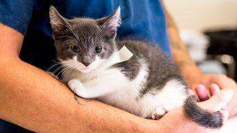 Cuándo esterilizar a los gatos|Camada de gatitos